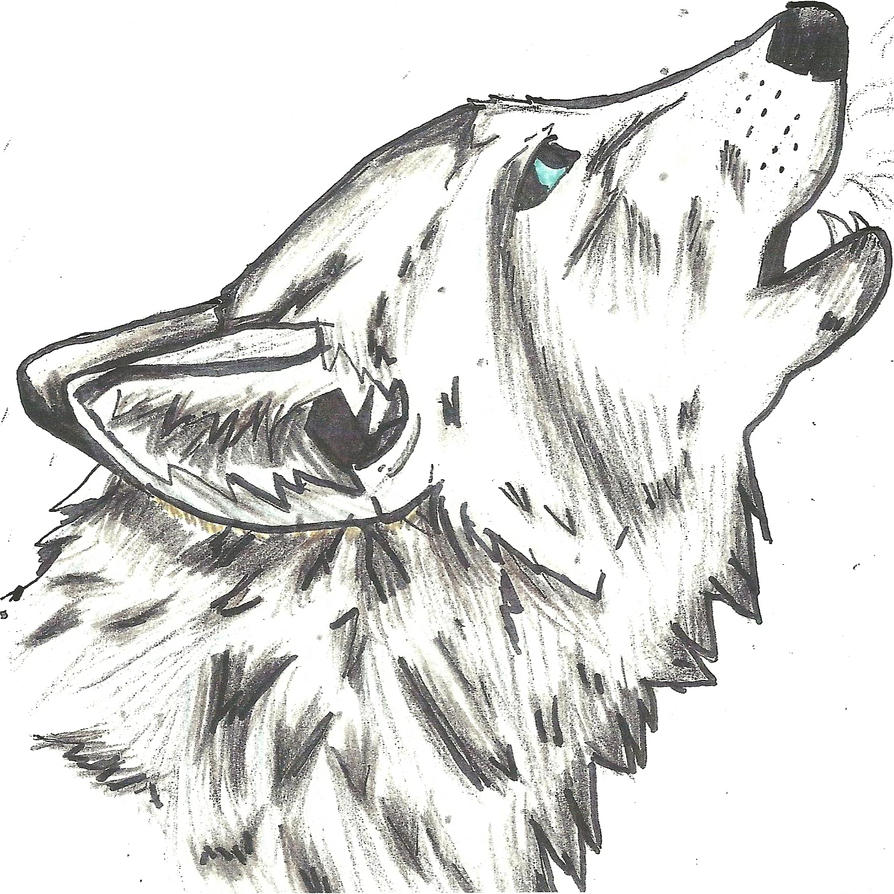 Step Drawing Wolf Head By Zetsumei Dragunov On Deviantart