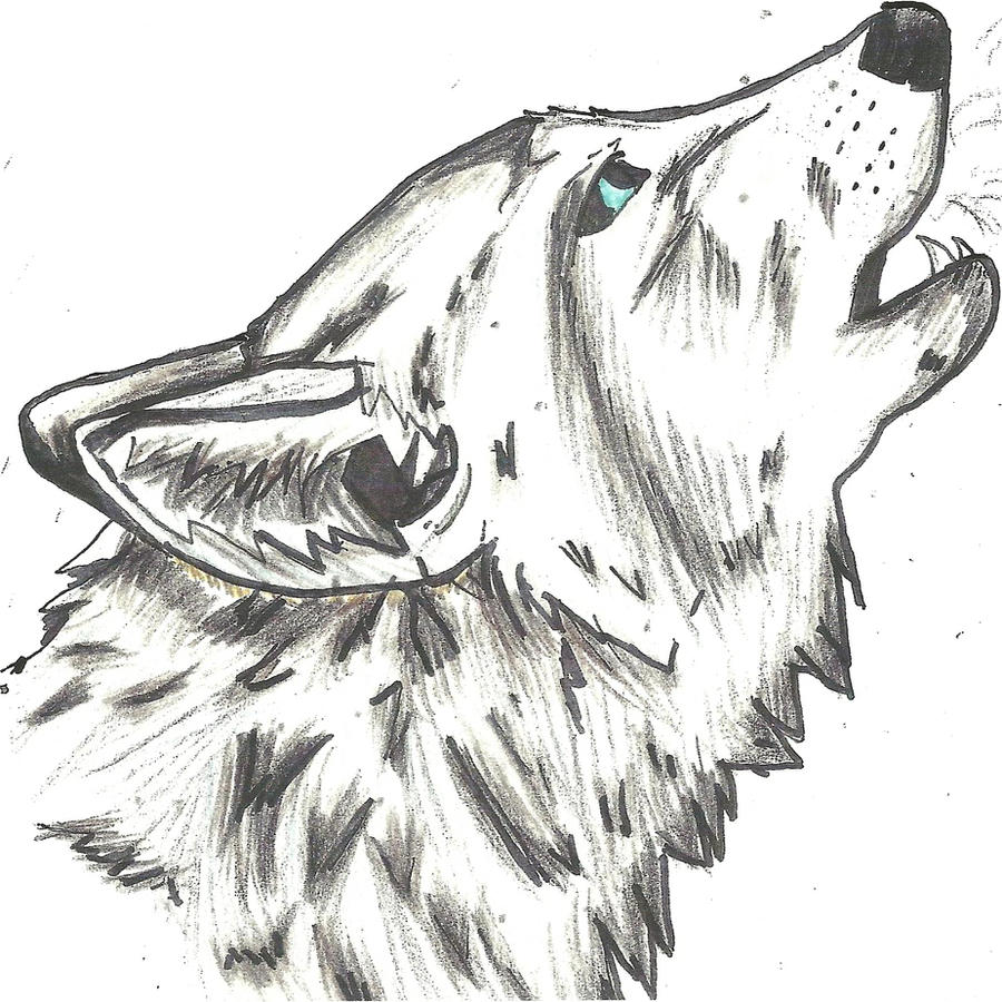 Line Drawing Wolf Head : Wolf head by zetsumei dragunov on deviantart