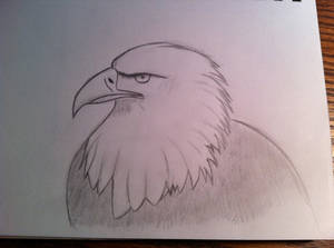 Just an eagle.