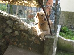 pilo the dog by Mikiel