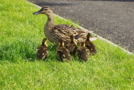 Mrs Duck and The Kids