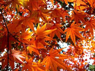 Leaves in Japan