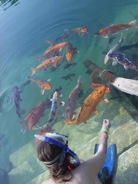Koi fish at vortex springs by alliece on deviantart for Koi pond vortex