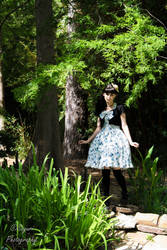 Lolita- A little lost