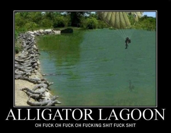 alligators by yq6