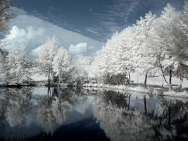 Surreal Infrared by lil-nitelite