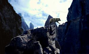 ` skywalker by Croconile