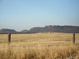 field stock by Asylum-Stock