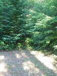 forest landscape 3 stock