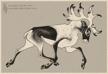 Rangifer by CanisAlbus