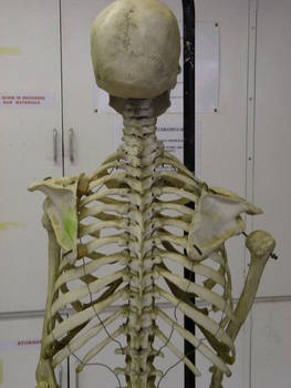 skeleton hhp