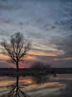 Just tree by jeremi12