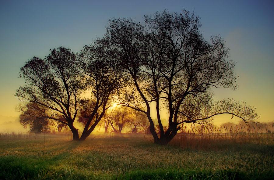 Morning fairy tale by jeremi12