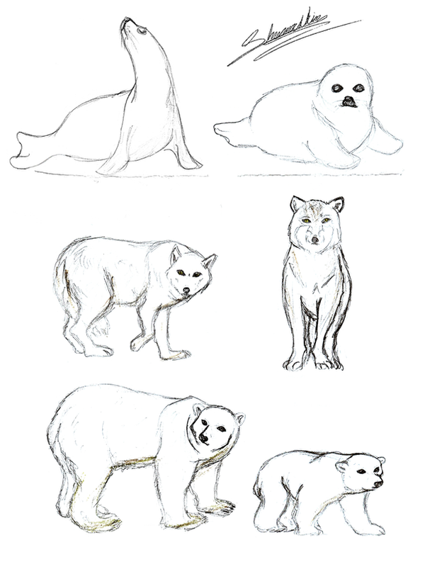 tundra animals coloring pages - photo#7