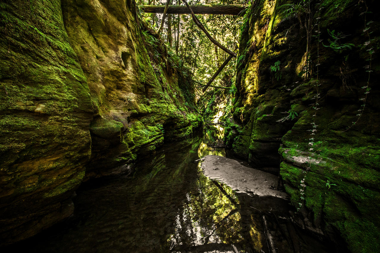 Jungle Creek by 5isalive