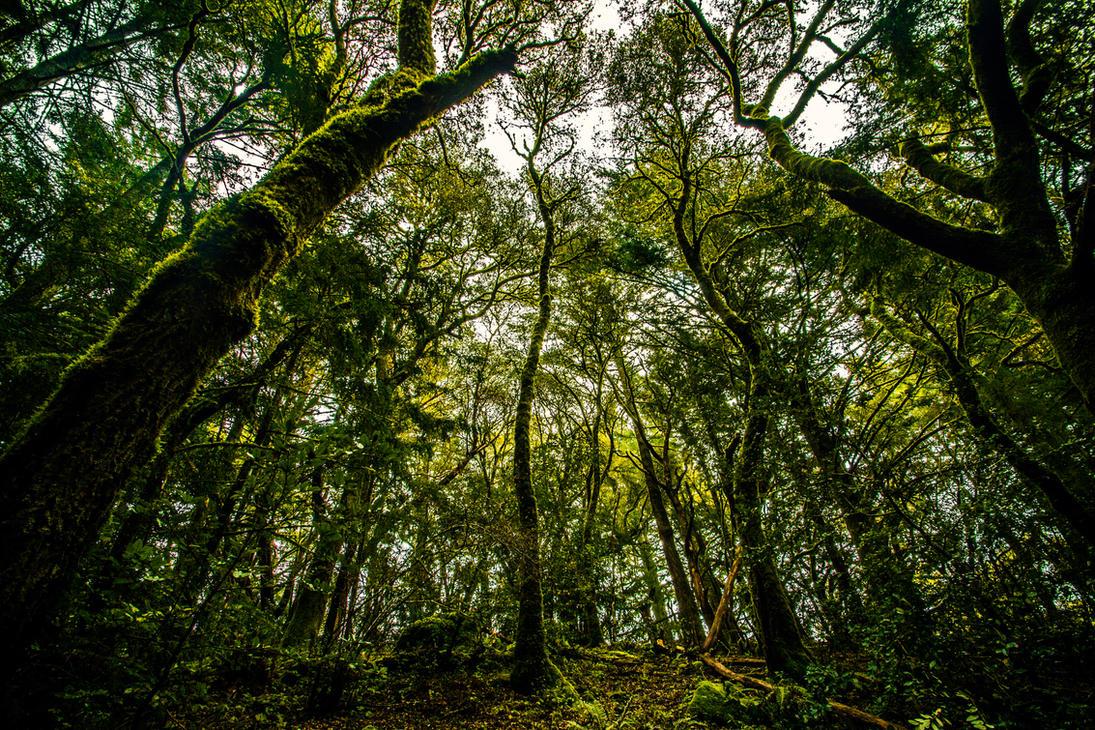 Cali Jungle by 5isalive