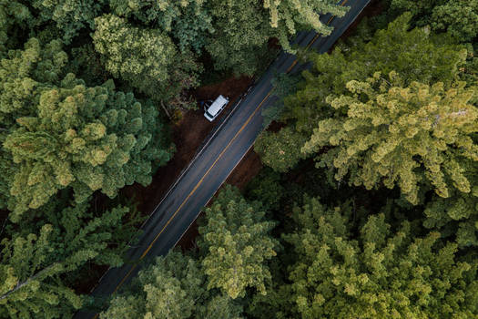 Above my van in a redwood forest