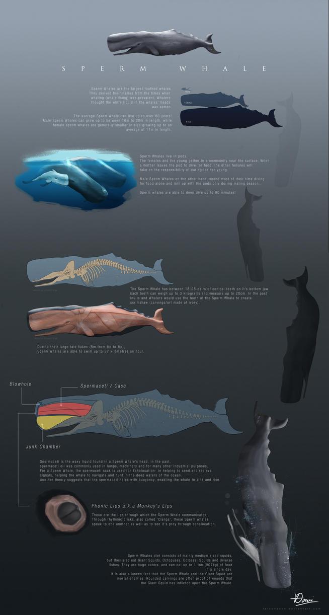The Sperm Whale Study! by naoxy on DeviantArt