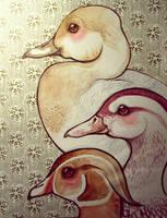 Ducks by lindsaycampbell