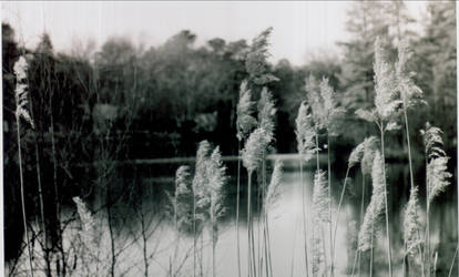 Lake by homogangbangfagbag