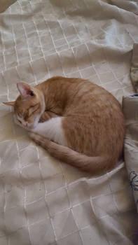 Beautiful cat nap