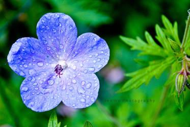 Cuteblueflower by jennyiscool983