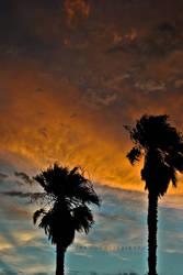 Palm Tree Sunset by jennyiscool983