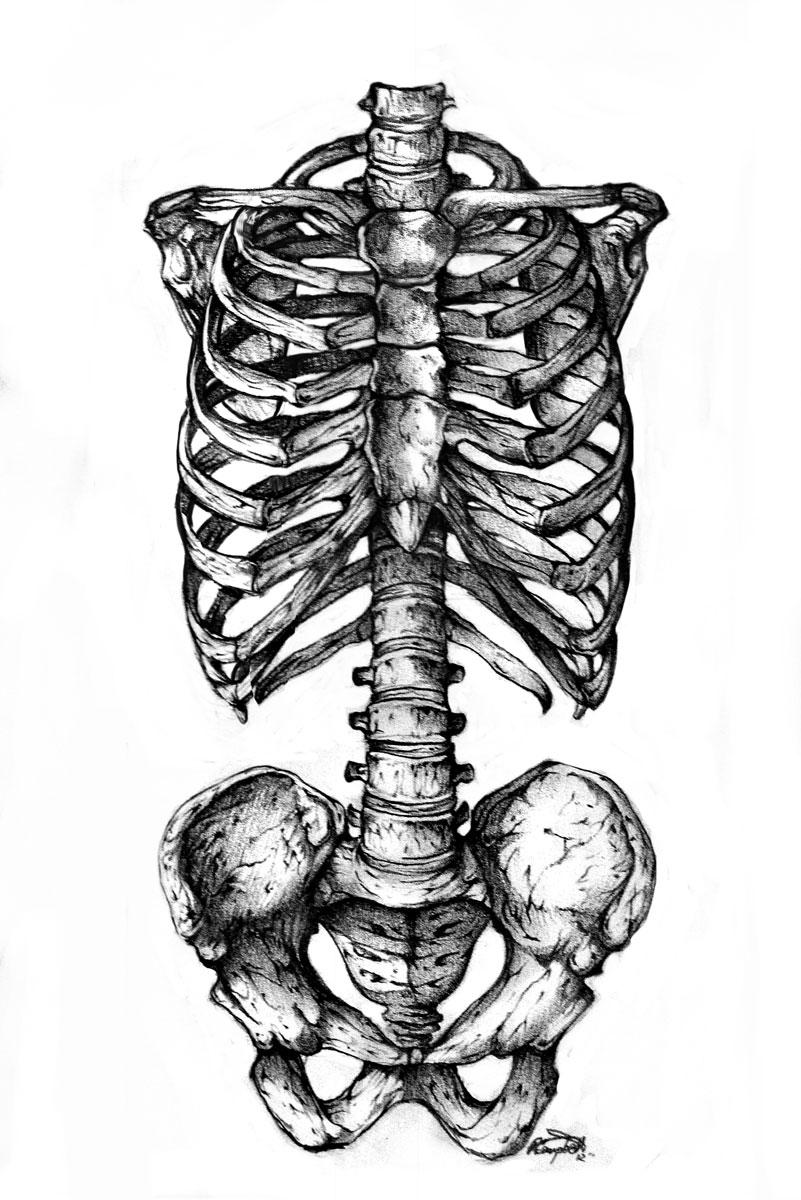 Anatomy by ReneCampbellArt