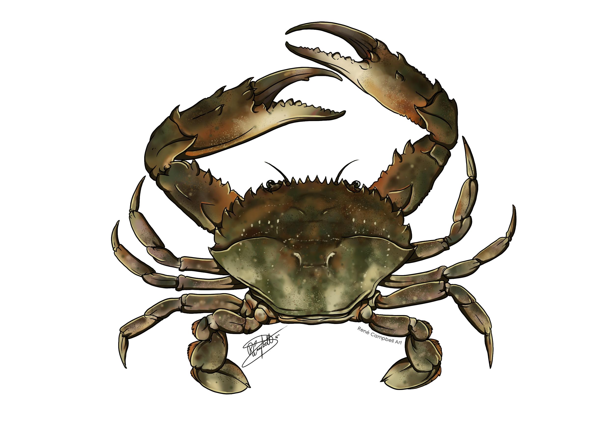 Marine Biology and Limnology on BioIllustration - DeviantArt
