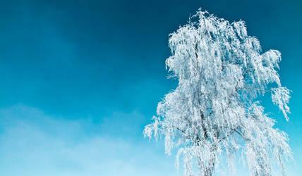 Concours les 4 saisons - hiver