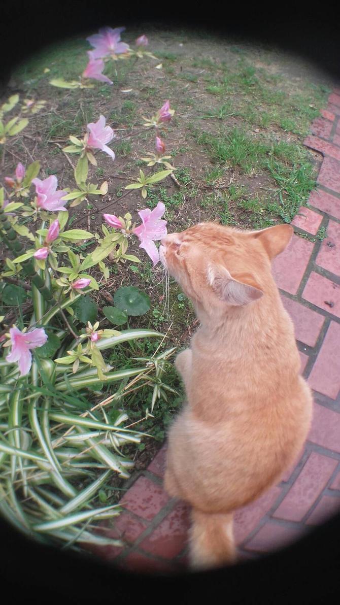 alois , my little cat by Kyumi-Jyumi