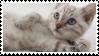 cat 2 by catmilkz