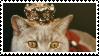 cat 3 by catmilkz