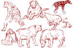Spotted Hyena Study Sketches
