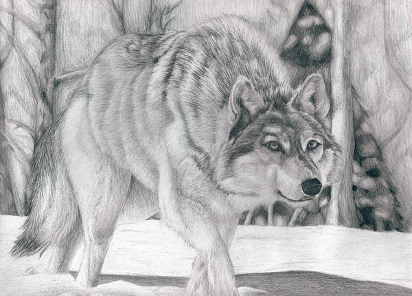 wolf in the snow by lycanthrope818