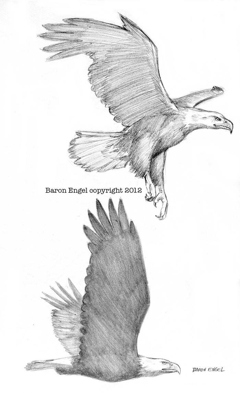 Eagle Vs Dragon Drawing Bald Eagles 02 by Baro...