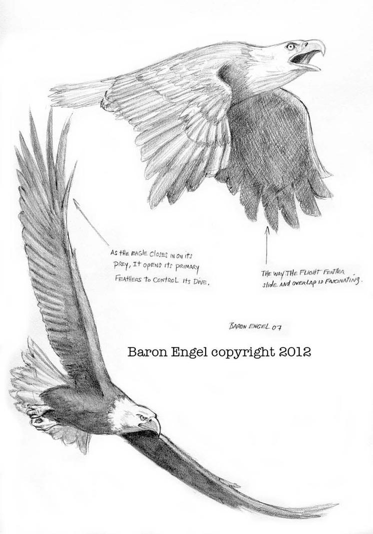Bald Eagles 03 by Baron-Engel on DeviantArt