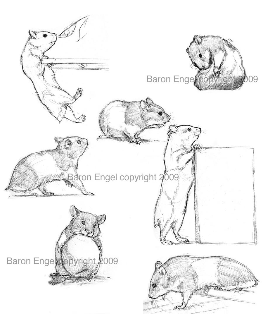 hamsters 01 by baron
