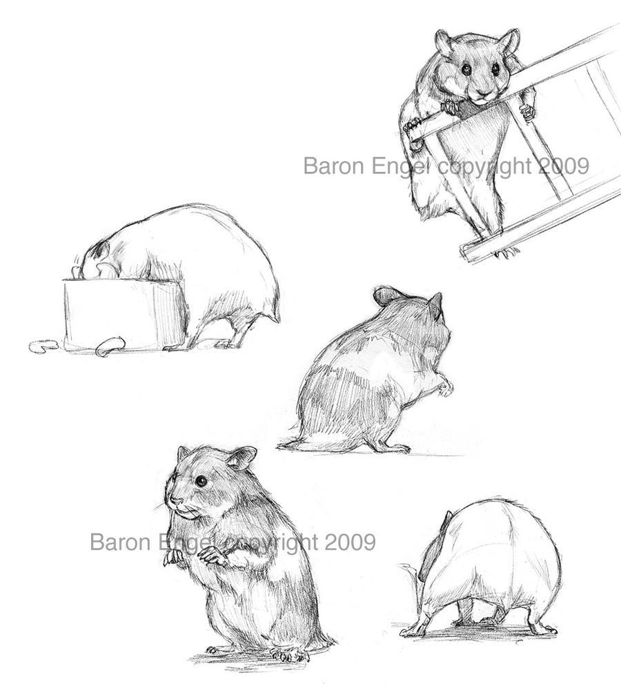 Hamsters 02 by Baron-Engel on DeviantArt
