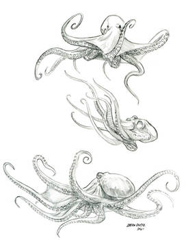 Octopus Study sketches 01