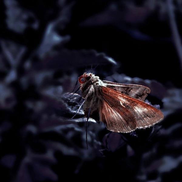 Mothmoth by Anca-Mihaela
