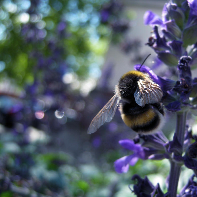 Bee by Anca-Mihaela
