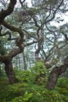 Triplet Trees