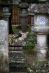 Encounter in Nara