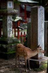 Sika Deer by Quit007