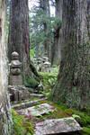 Graveyard Cedars