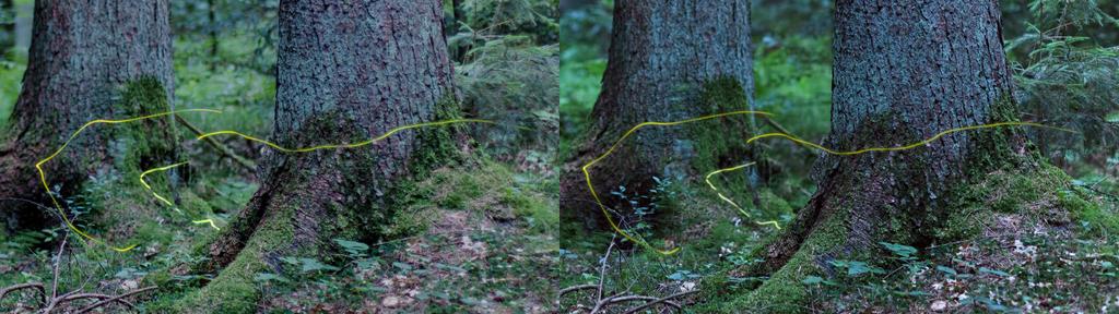 3D Fireflies - Detail