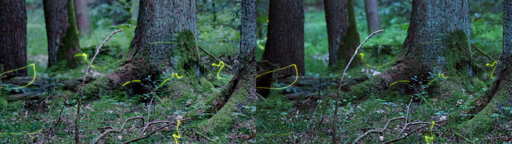 3D Fireflies II - Detail