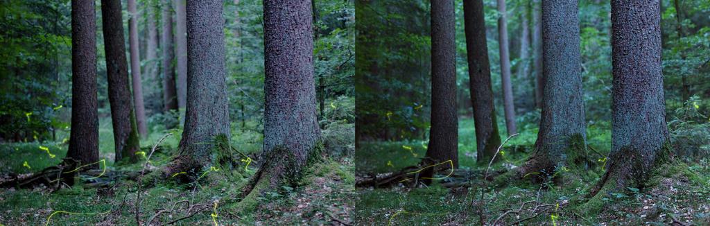 3D Fireflies II