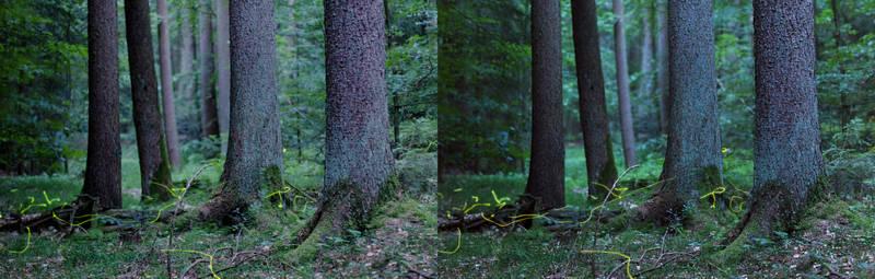 3D Fireflies III